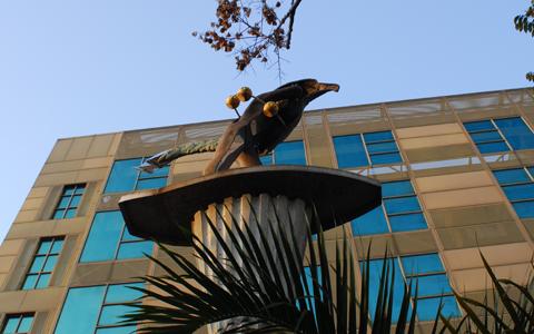 圖片1: 風雲際會-鳥人 (作品照片共3張)