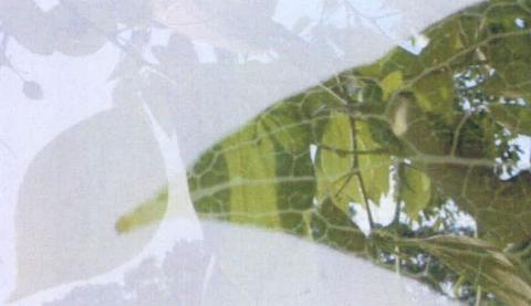 圖片4: 《觀聽的邊境--微觀世界》(植/物/像)     At the Edge of Perception A Microscopic World (Flora Anima)