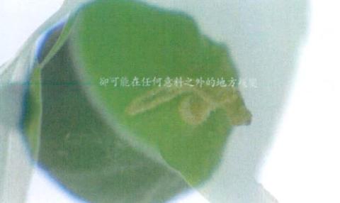 圖片5: 《觀聽的邊境--微觀世界》(植/物/像)     At the Edge of Perception A Microscopic World (Flora Anima)