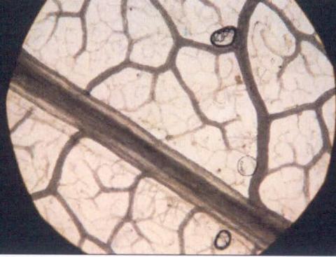 圖片8: 《觀聽的邊境--微觀世界》(植/物/像)     At the Edge of Perception A Microscopic World (Flora Anima)