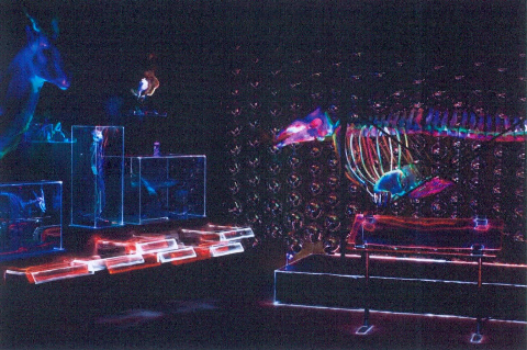 圖片3: 光拓臺大—動物博物館    NTU Lightscape  -  Museum of Zoology