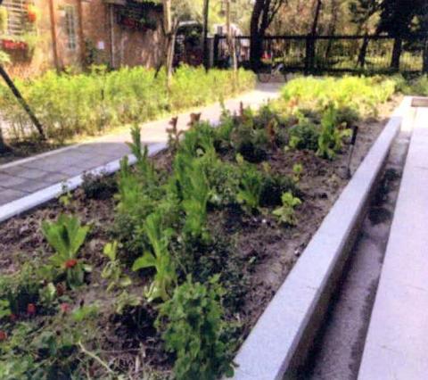 圖片3: 植變:身態園丁的大療癒術   ThePlant Transformation Project: The Healing Effect of Gardening