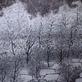 寒林瑞雪,作品照片縮圖共1張