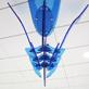 縮圖4: 風箏--悠游天際