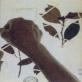 縮圖2: 《觀聽的邊境--微觀世界》(植/物/像)     At the Edge of Perception A Microscopic World (Flora Anima)
