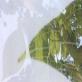 縮圖4: 《觀聽的邊境--微觀世界》(植/物/像)     At the Edge of Perception A Microscopic World (Flora Anima)