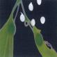 縮圖6: 《觀聽的邊境--微觀世界》(植/物/像)     At the Edge of Perception A Microscopic World (Flora Anima)
