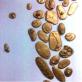 縮圖7: A案:植物譜書  Plant Record / Earth Book